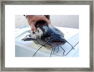Channel Cat Catfish Framed Print by Linda Rae Cuthbertson