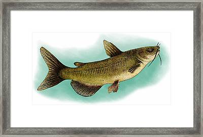 Channel Catfish Framed Print by Roger Hall
