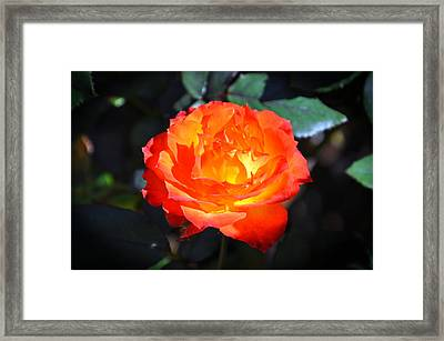 Charisma Rose Horizontal Framed Print