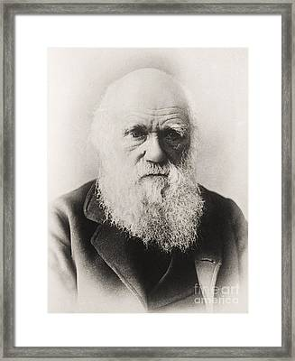 Charles Darwin Framed Print by English School