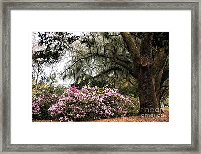 Charles Towne Beauty Framed Print by John Rizzuto
