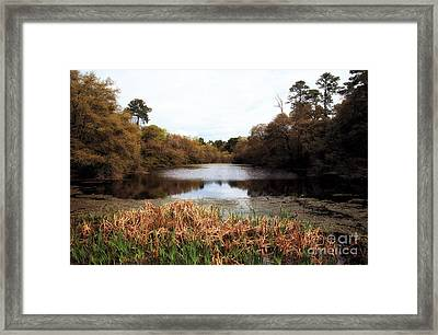 Charles Towne Pond Framed Print by John Rizzuto