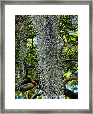 Charleston 012 Framed Print by Lance Vaughn
