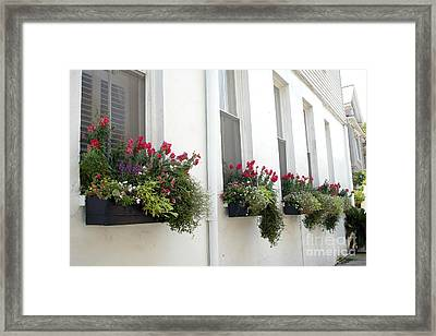 Charleston French Quarter Historic District Dreamy Flowers Window Boxes  Framed Print by Kathy Fornal