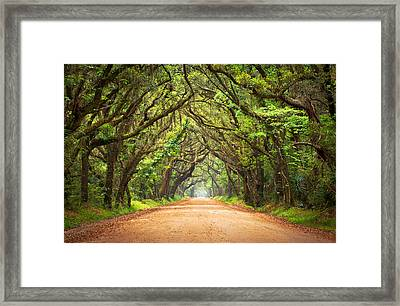 Charleston Sc Edisto Island - Botany Bay Road Framed Print by Dave Allen