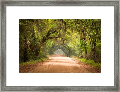 Charleston Sc Edisto Island Dirt Road - The Deep South Framed Print by Dave Allen