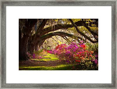 Charleston Sc Magnolia Plantation Gardens - Memory Lane Framed Print by Dave Allen
