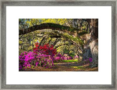 Charleston Sc Spring Azalea Flowers - A Servant's Grace Framed Print by Dave Allen