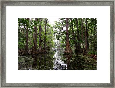 Framed Print featuring the photograph Charleston Swamp by John Johnson