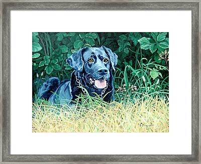 Charlie Framed Print by Beverly Theriault