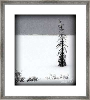 Charlie Brown's Christmas Tree Framed Print