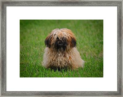 Framed Print featuring the photograph Charlie by Greg Norrell