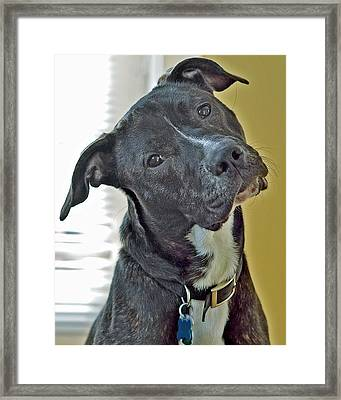 Charlie Framed Print by Lisa Phillips