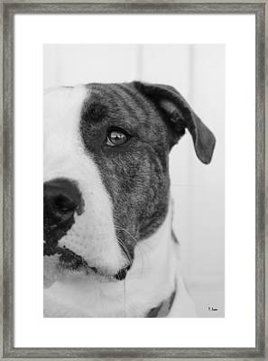 Charlie Framed Print by Thomas Leon