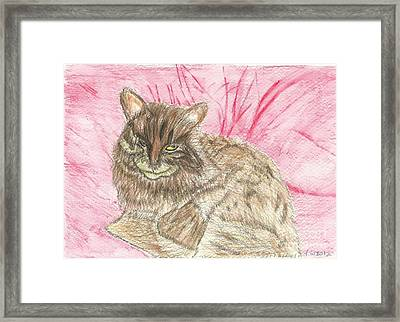 Charlie Framed Print by Tracey Williams