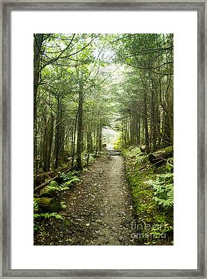 Framed Print featuring the photograph Charlies Bunion Bald Trail by Debbie Green