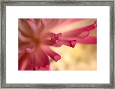Charm Catcher Framed Print