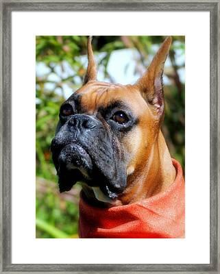 Charming Chance Framed Print by Tracy Shaw