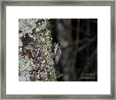 Charming Cicada Framed Print