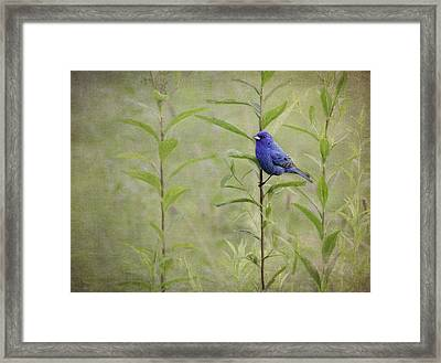 Charming Curiosity Framed Print by Dale Kincaid