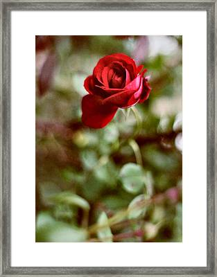 Charming Life Framed Print