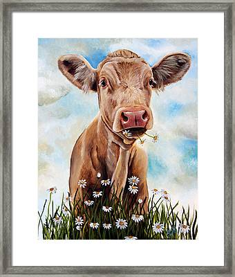 Charolais Lunch Framed Print by Laura Carey