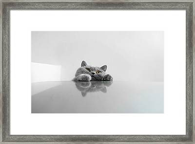 Chartreux Rearing Up On Table Against Framed Print by Dipak Maske / Eyeem