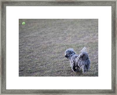 Chase The Ball Framed Print by Theresa Davis