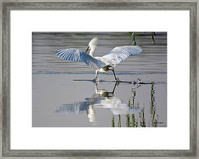 Chasing Down A Fish Framed Print by Stephen  Johnson