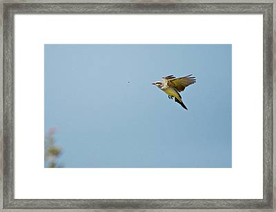 Chasing Lunch Framed Print by Roy Williams