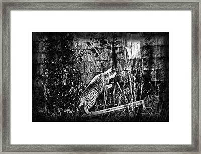 Chasing Shadows Framed Print by Susan Capuano