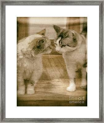 Chatty Kitties Framed Print by Jacqui Fiels