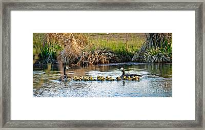 Cheaper By The Dozen Framed Print by Robert Bales