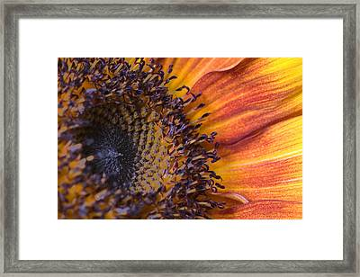 Check Out My Patterns Framed Print