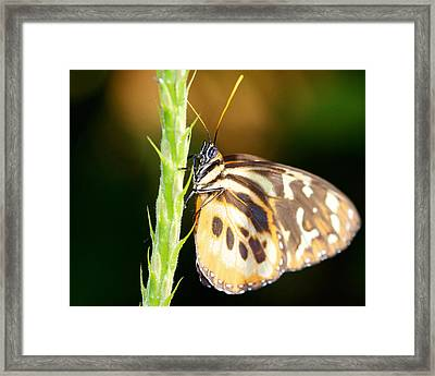 Checkered Past 16x20 Framed Print by Pamela Gail Torres