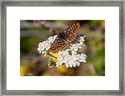 Framed Print featuring the photograph Checkerspot Butterfly On A Yarrow Blossom by Jeff Goulden