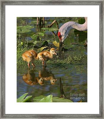 Checking On The Babies Framed Print