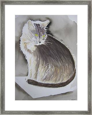 Cheeky Cat  Framed Print