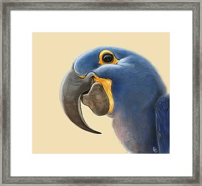 Cheeky Parrot Framed Print