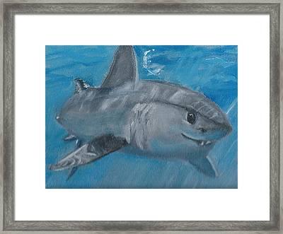 Cheeky Shark Framed Print