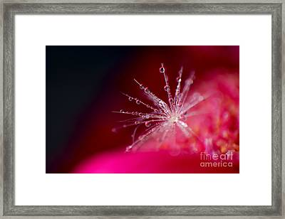 Cheerful Framed Print by Eden Baed