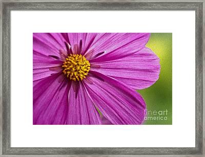 Cheerful Framed Print by Nur Roy