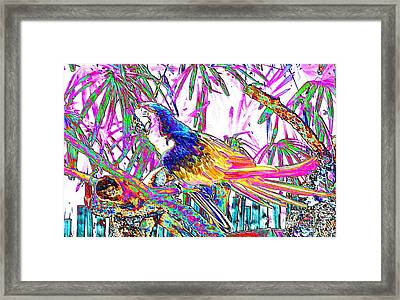 Cheerful Parrot. Colorful Art Collection. Promotion - August 2015 Framed Print