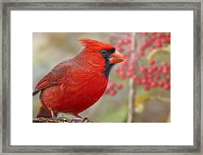Cheerful Presence In The Garden Framed Print by Bonnie Barry