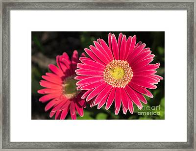 Cheerfulness Framed Print