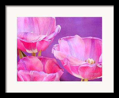 Pinks And Purple Petals Photographs Framed Prints