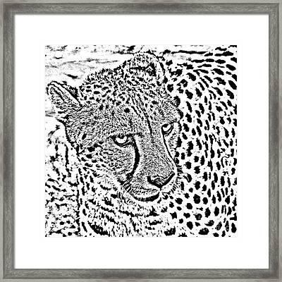 Cheetah 3 Quarters Macro Profile Black And White Digital Art Square Format Framed Print