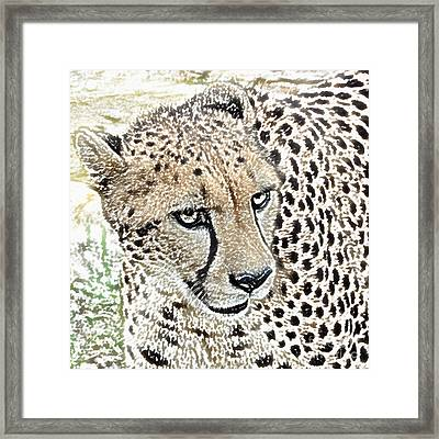 Cheetah 3 Quarters Macro Profile Colored Pencil Digital Art Square Format Framed Print by Shawn O'Brien