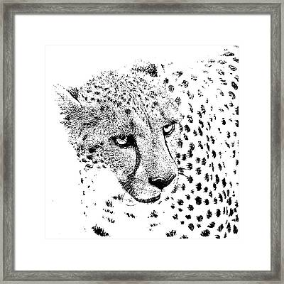 Cheetah 3 Quarters Macro Profile Stamp Black And White Digital Art Square Format Framed Print by Shawn O'Brien