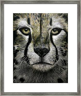 Cheetah  Framed Print by Chris Perry